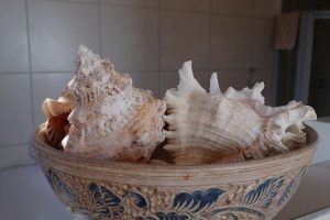 shells in a bowl